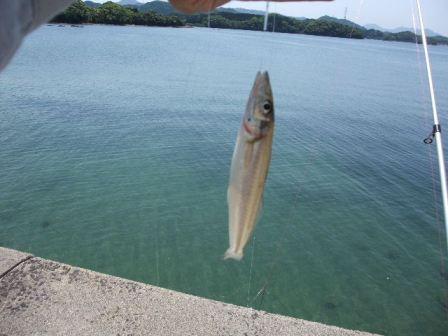 2012_05052012-5-5福島の釣りと0005.JPG